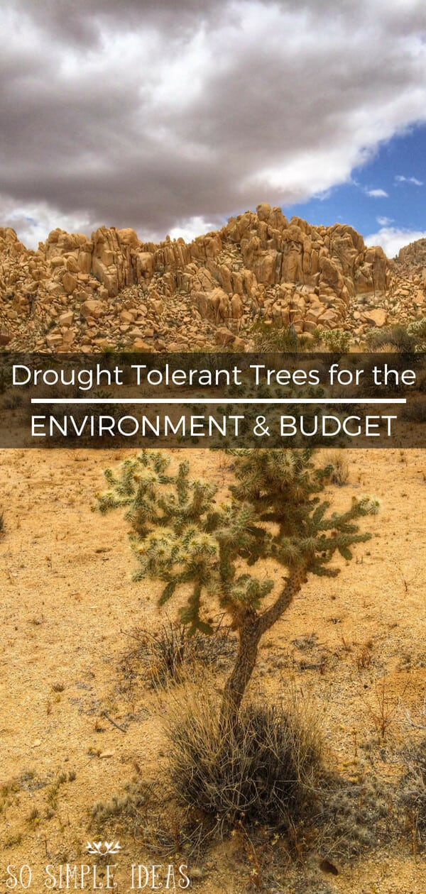 Has your home turf not had a good soaking in a while? If you've got a green thumb, consider planting drought tolerant trees and plants in the yard. #landscaping #trees #plants | sosimpleideas.com