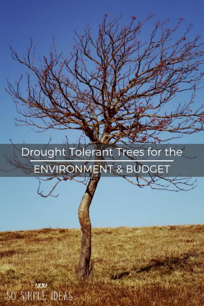 Has your home turf not had a good soaking in a while? If you've got a green thumb, consider swapping your water-guzzling shrubbery with drought tolerant trees and plants.