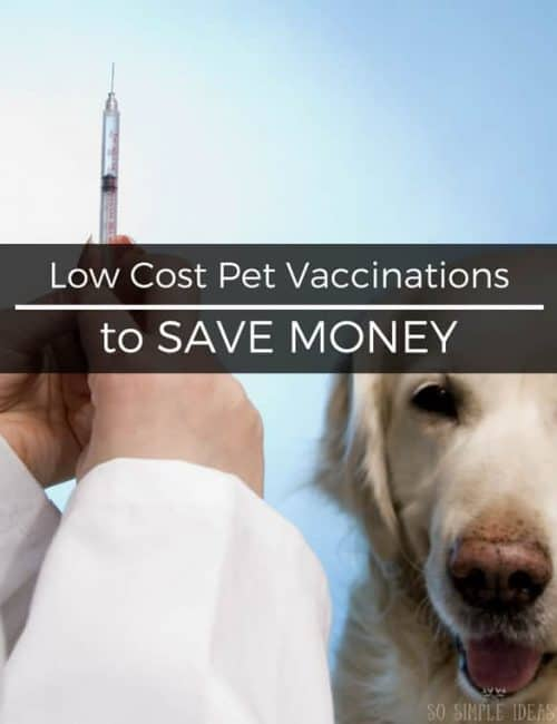 Low Cost Pet Vaccinations to Save Money Long Term