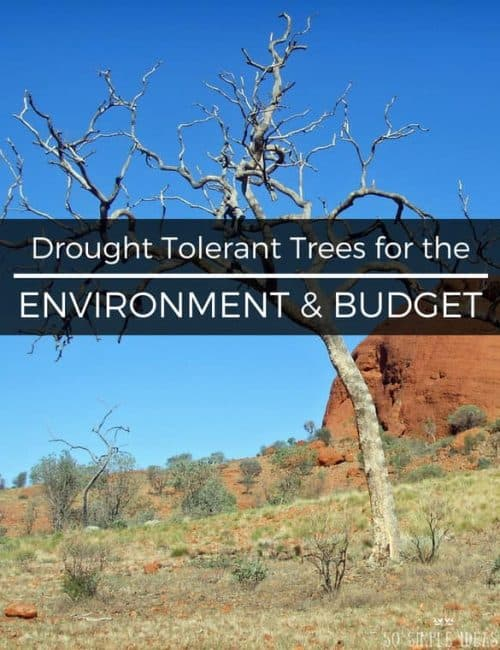 Drought Tolerant Trees for the Environment and Budget