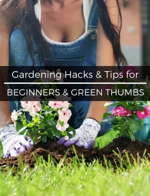 Gardening Hacks and Tips for Beginners with Green Thumbs