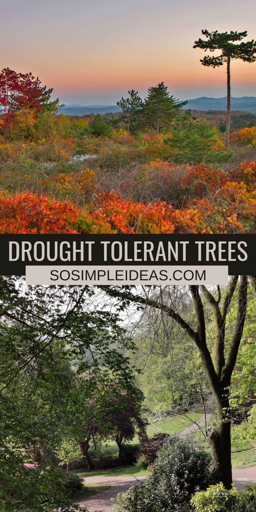 drought tolerant trees pinterest image